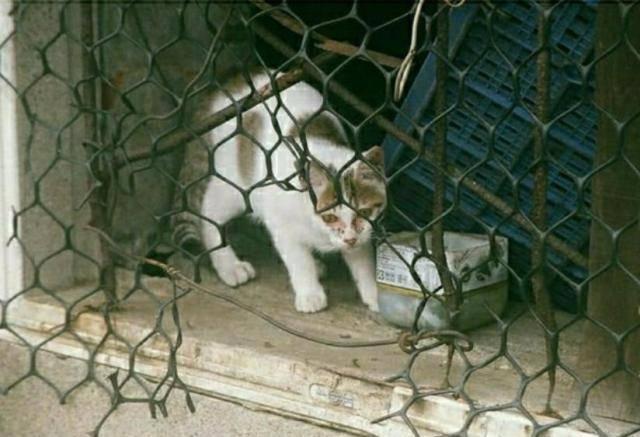 原创 落难猫抵家六个月大转变,瘦脸吃成胖兔子,全靠一颗痣才认出它