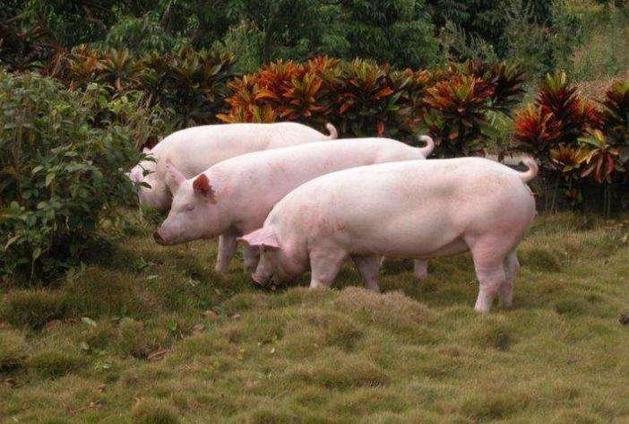 """外国食品巨头蠢蠢欲动,在中国力推""""人造肉"""""""
