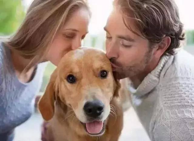 原创 网友以百万美金磨练路人,欲买下他身边的狗狗,路人:这是家人