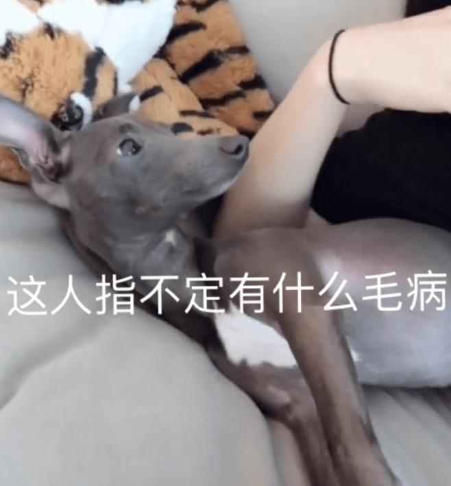 养狗后你多了些什么怪癖?