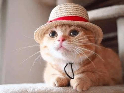 【个人养宠经验分享】什么猫粮可以帮橘猫补血,哪种猫粮补血好