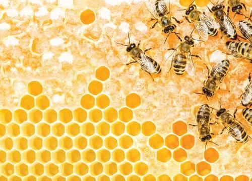 蜂王浆的作用与功效禁忌人群