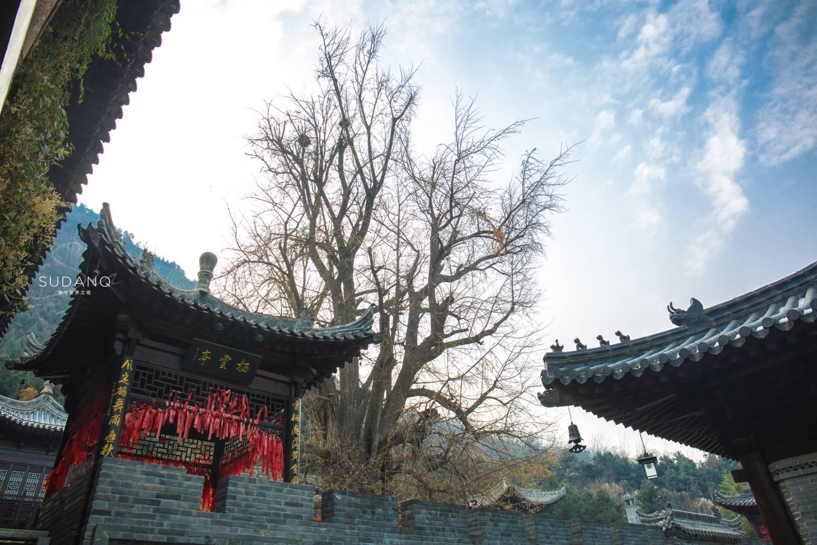 原创             终南山下这座千年古刹,因一棵树火遍网络,但谢绝观光旅游团体