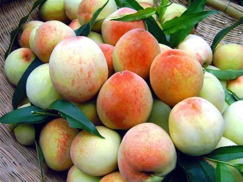 """吃桃子能""""养人"""",可水蜜桃、大蟠桃、黄桃,糖尿病患者选哪种? 营养补剂 第3张"""