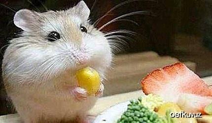 原创 呆萌仓鼠,可爱兔子,这些受人迎接的宠物,吃翔能力远超众人想象