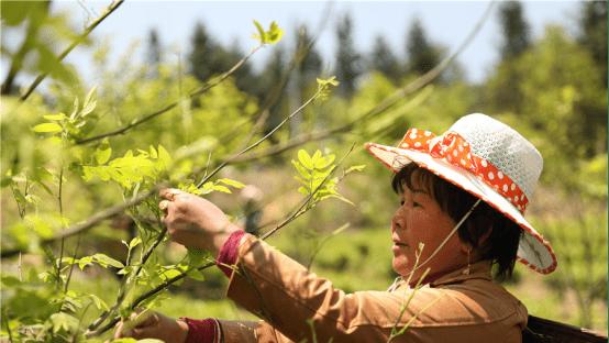 榕树贷款:普惠金融为荒山染上绿色