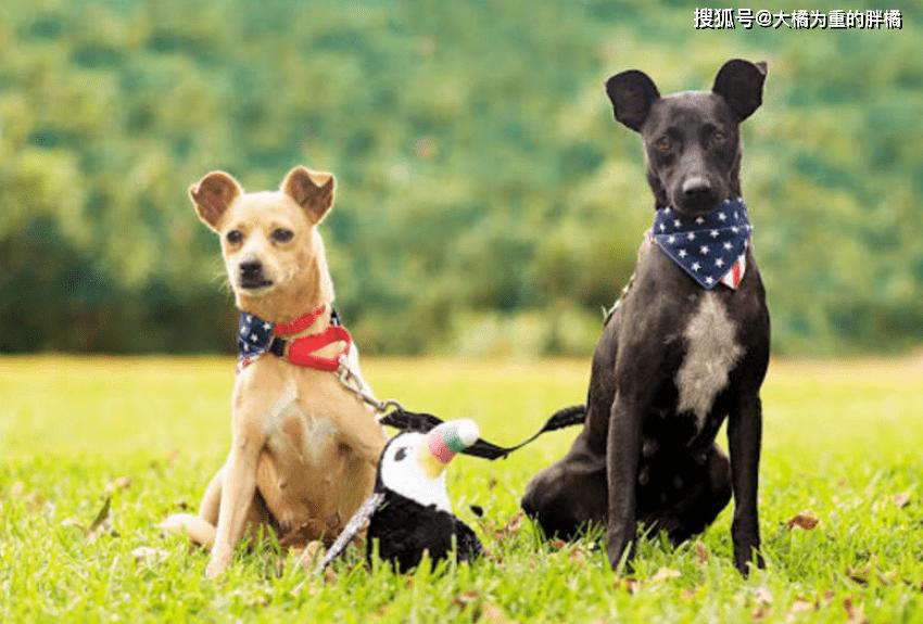 原创 两只狗狗在快餐店求助几月无果,却依然热情待人,坚持终究有回报