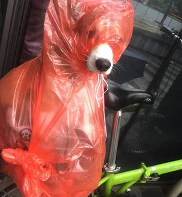 原创 男子怕狗狗被雨淋湿,想出了这种奇葩的招式,路人看到纷纷笑坏
