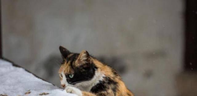 这只流浪猫在宠物店里保持凉爽,但因绝