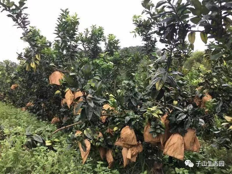 惠州采摘园