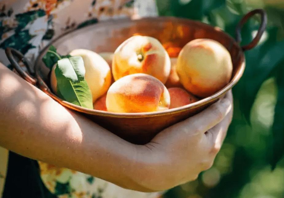 """原创桃子堪称""""果中皇后"""",涵盖了人体所需要的大部分营养素"""