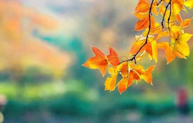 秋燥渐起,重在润肺养肺