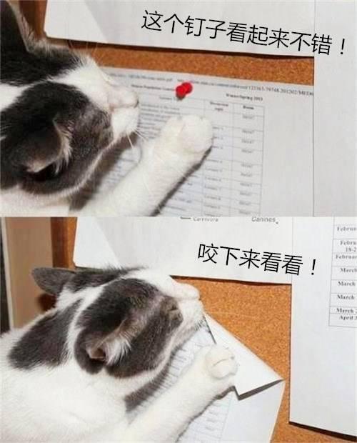 猫咪犯错被处罚后,竟从墙上咬下钉子放