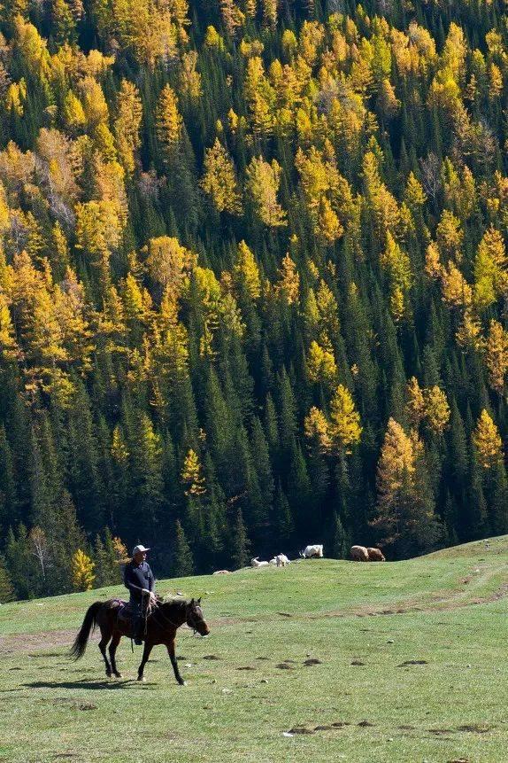 新疆的秋天,最美的中国秋天!