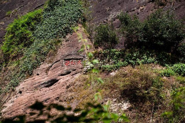 原创             这里是武夷山,双遗产地游玩攻略