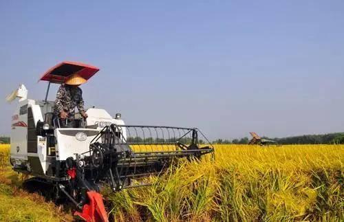 包罗丰收节启动仪式 农民中国