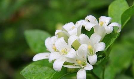 """不要被这""""七种花""""的价值所迷惑 它很漂亮但""""有毒"""" 不能养 趁早搬走"""