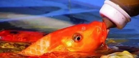 你知道养鱼相当于保持健康吗
