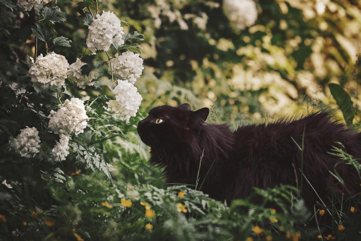 猫咪增肥吃什么?保姆级别的猫咪