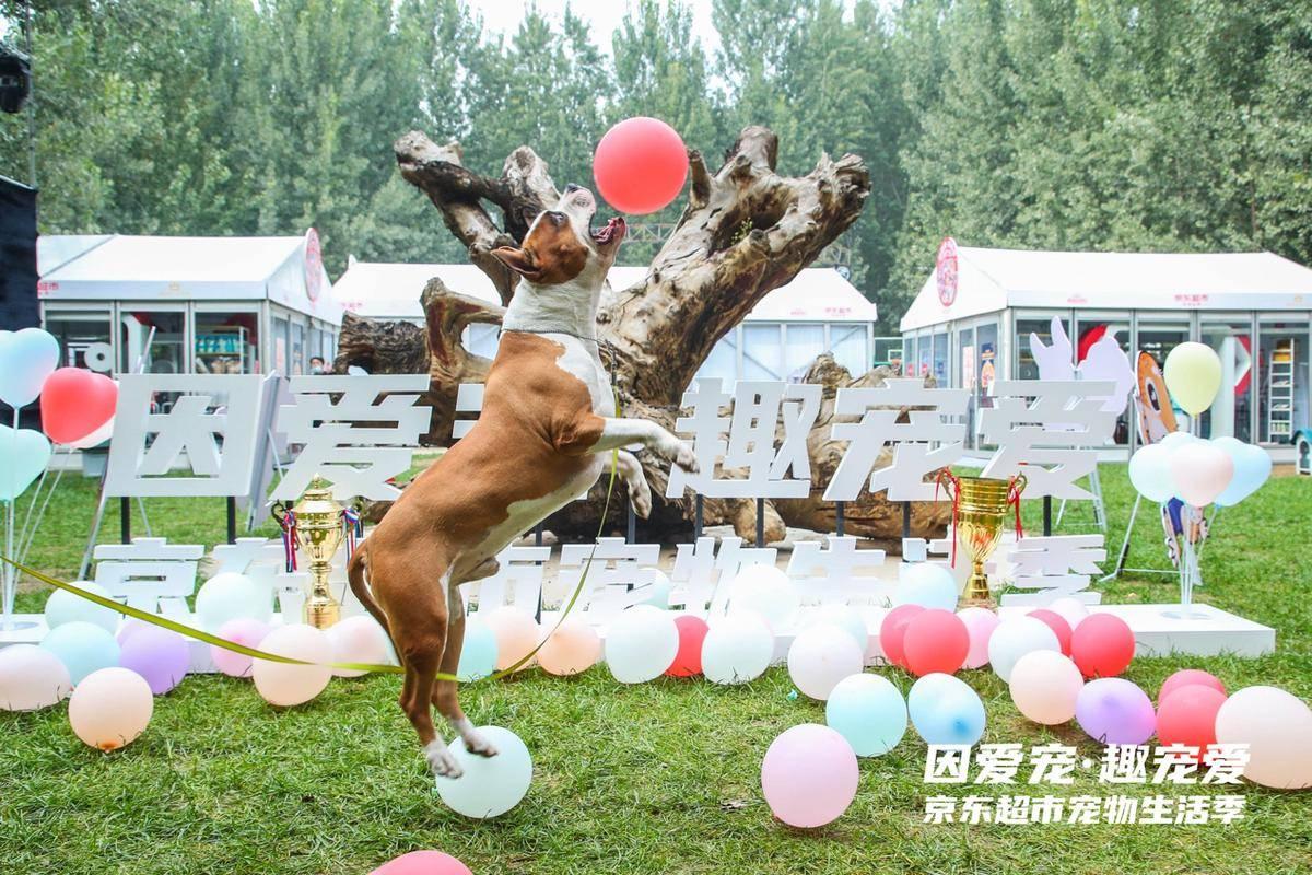 """猫狗玩起COSPLAY,京东超市""""宠爱嘉年华""""让爱宠HIGH起来!"""