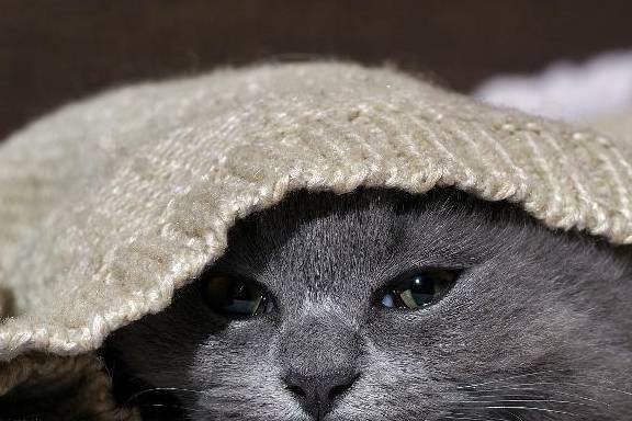 家里的猫有