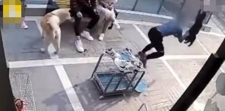 情侣宠物店怒骂丢狗 导致老板娘吼:你怎么不投自己?