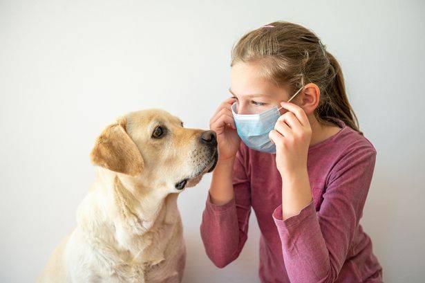 """镜报:英政府投入50万英镑训练新冠肺炎""""医学检测犬"""""""