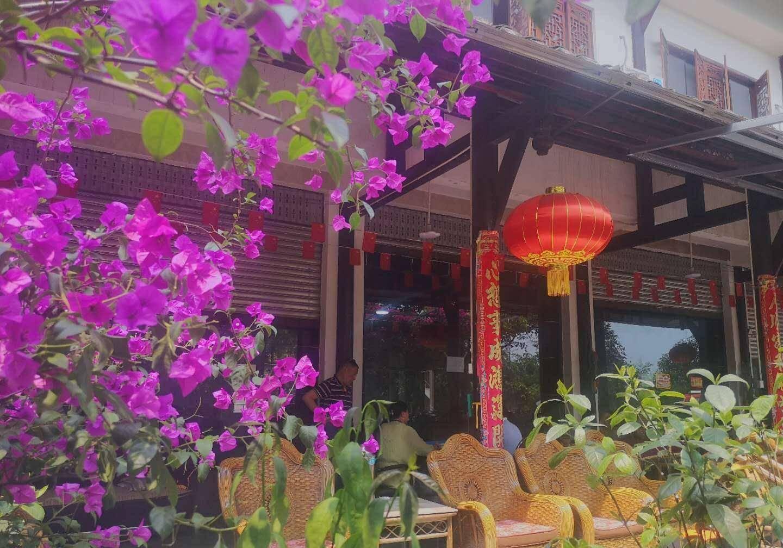 本是海南省的省花,为何却在成都火了?家家户户都有一株,超美!