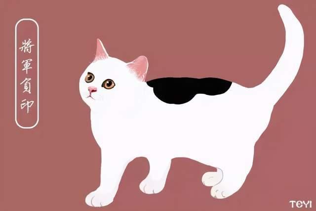 中华田园猫的全部品种图片