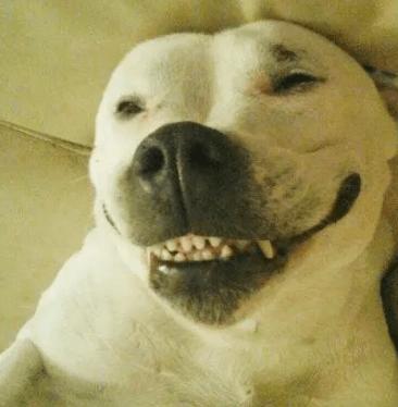 这条狗颠覆了网友对金毛的认知,跟喝醉的人回家,把别人家给拆了