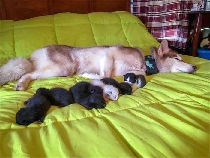 七只奶猫被丢在树林等死,下一秒却遇见了二哈,从此当上了奶妈?