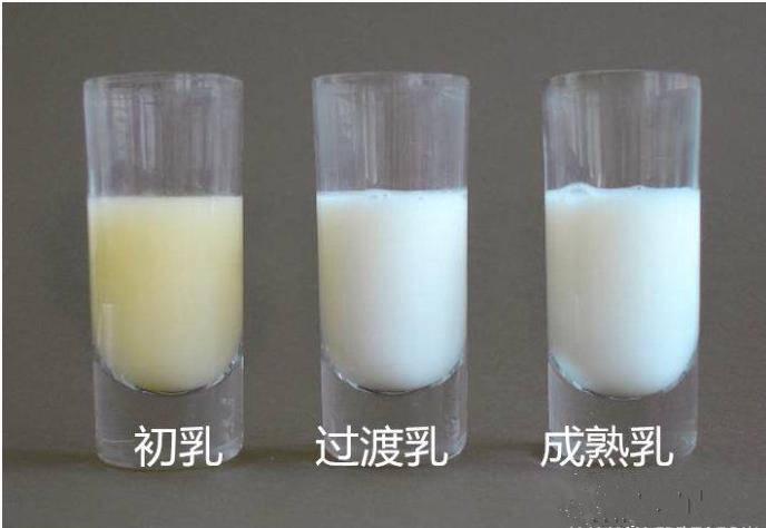产后开奶的黄金时间,许多人搞不清,掌握三步曲教你正确开奶