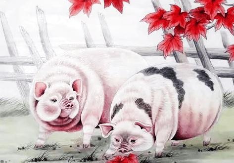 2、属猪和马的婚配如何好:属猪的和属马的配吗?可以吗?