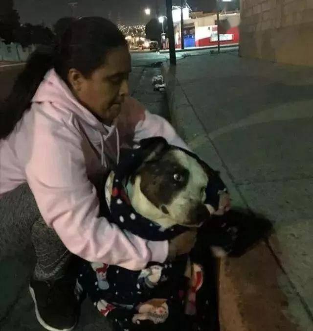 狗狗因维护爷爷而不被喜欢,9年后家人竟赶走它,被救时开心极了