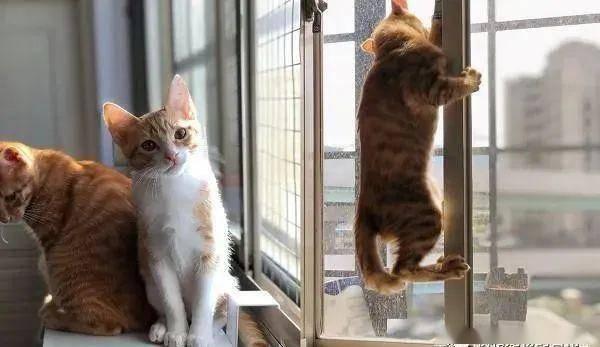 橘猫跑来厨房捣乱,辣妈伸出大长腿防守,网友看了全歪楼