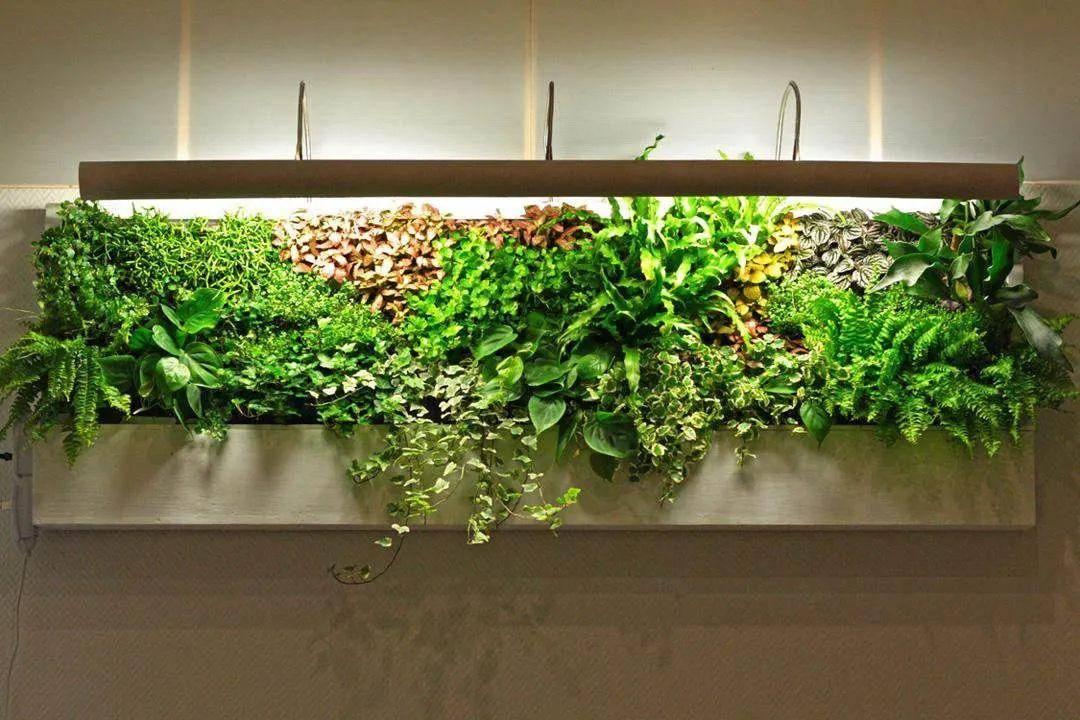 仿真绿植墙价格_室外绿植墙价格_合肥仿真绿植墙