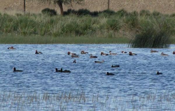 新疆塔城:初夏的库鲁斯台草原湿地