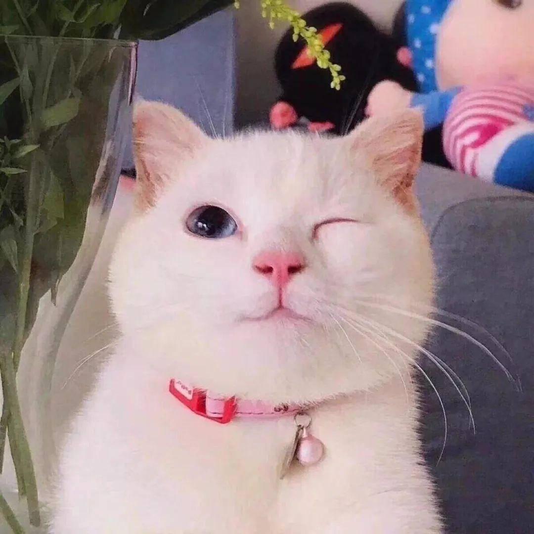 可爱又沙雕的猫咪头像