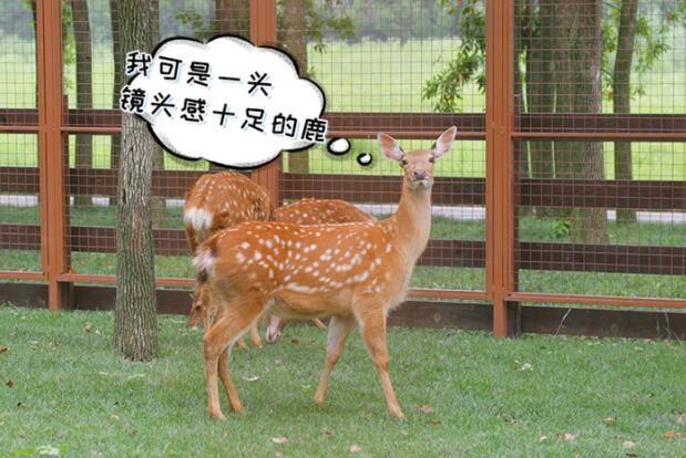 """""""我这么可爱,怎么还没有名字?""""出生一周,良渚古城""""网红""""鹿宝宝征名"""