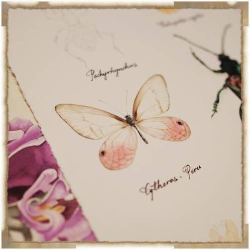 福利 记录美好自然 学习制作自然博物笔记
