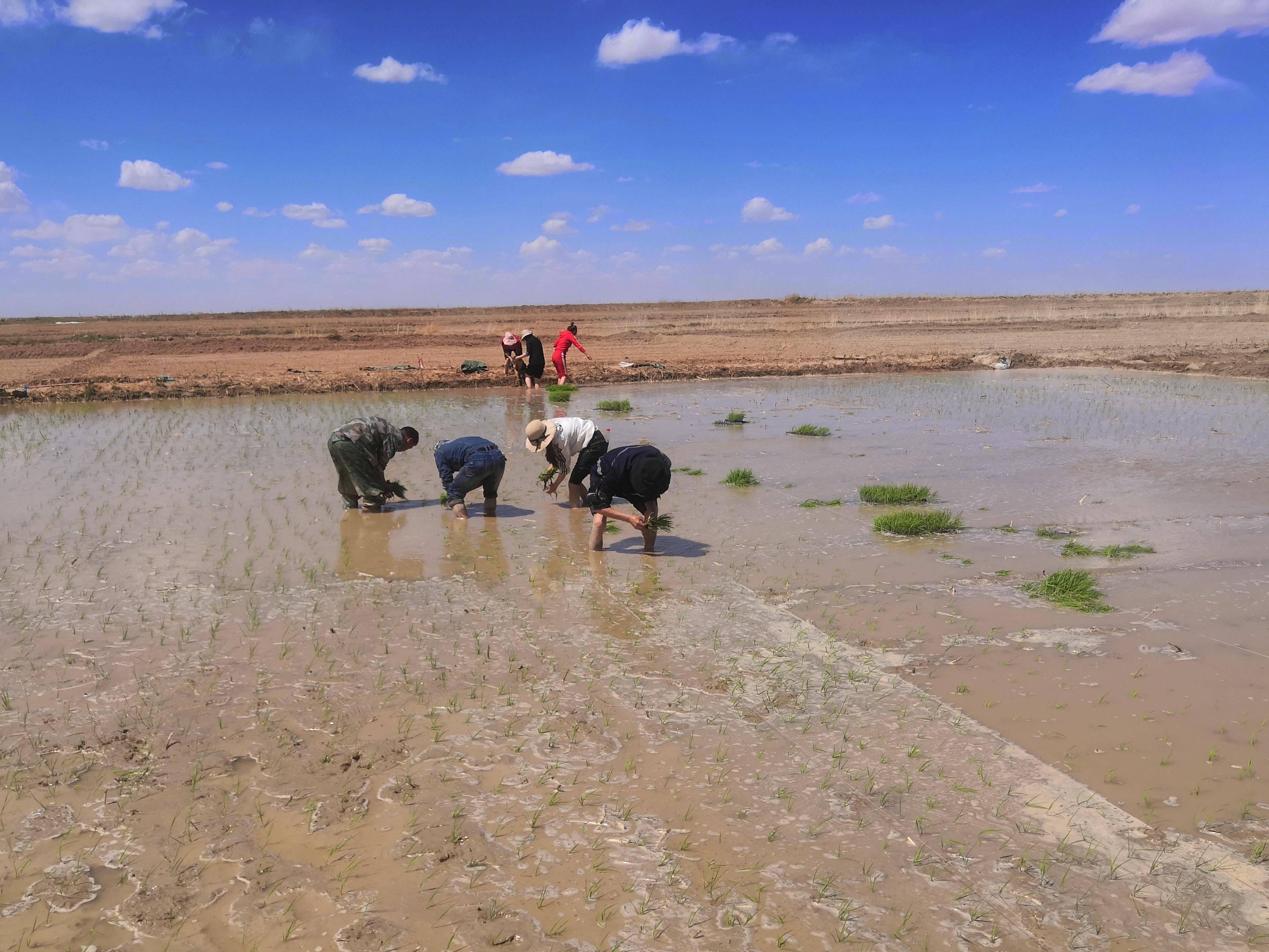 青藏高原人口少原因是什么_青藏高原有什么花