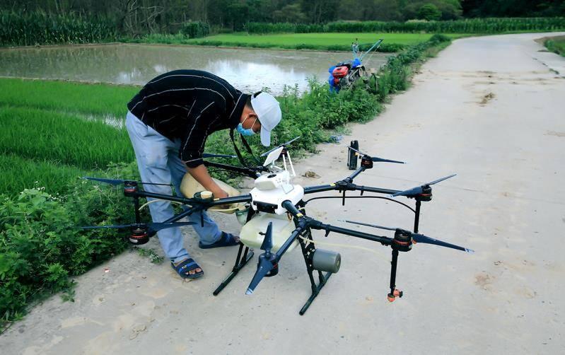 湖南宁远两村庄出现蝗灾,官方:采取了捕杀措施,已被控制