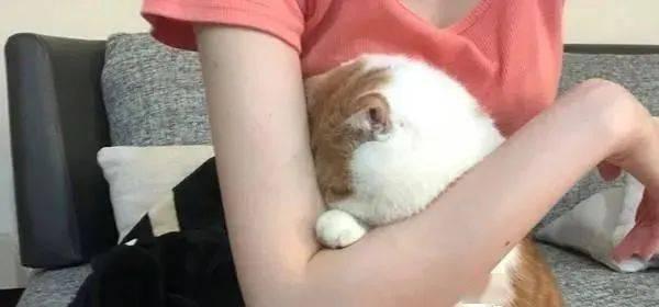 猫咪作势要打柴犬,不意手手太短,基本......