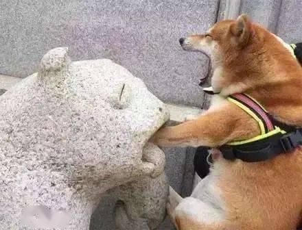 这些年狗子犯过的蠢,你就是专门来搞笑的吧