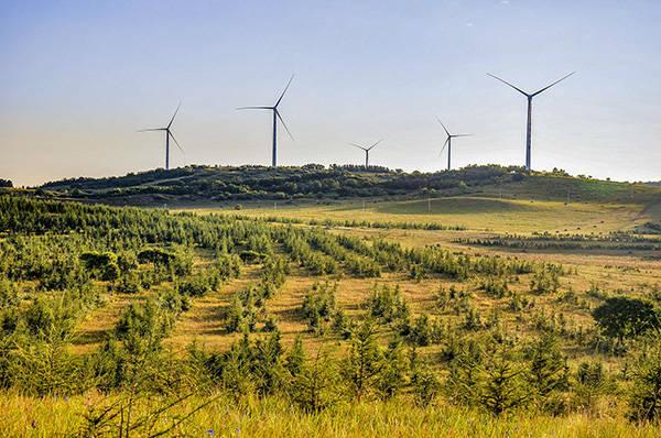 全球四分之一新增绿化来自中国,贡献比例居全球首位