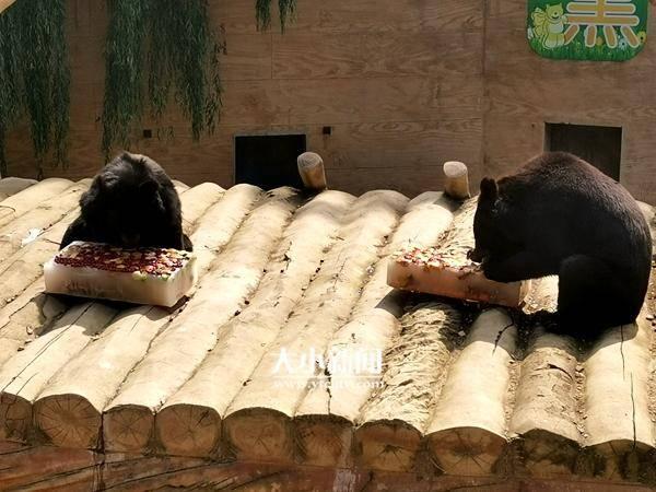 消暑降温,南山公园动物园动物吃上大冰棒  span class=