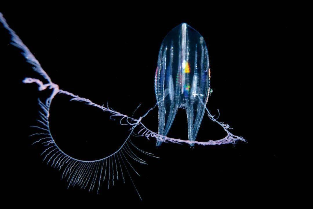 海底生物摄影
