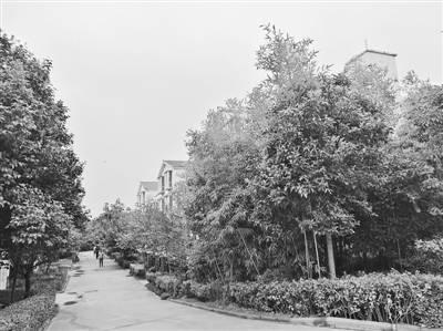 这是郑州市五个区中唯一的山村 绿树掩影有这个词语吗