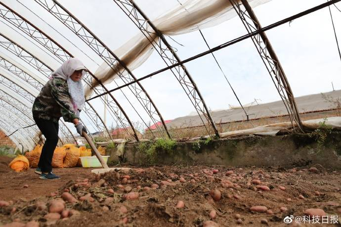 <b>《土豆之光》,宁夏:土豆的故乡,无穷无尽。 宁夏西海固国联马铃薯产业有限公司</b>