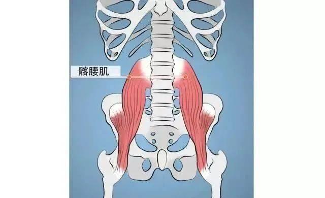 练瑜伽只知道腹肌?是时候关心一下髂腰肌了!